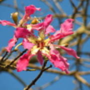 Pink Orchid Tree Poster