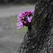 Pink Peeking At You Poster