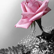 Pink Petals Poster by Carlos Caetano