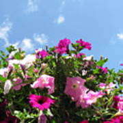 Pink Petunias In The Sky Poster