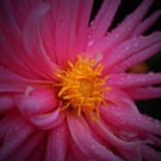 Pink Pinwheel Poster