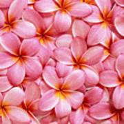 Pink Plumeria Poster