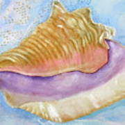 Pink Queen Conch Shell Poster