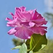 Pink Rose Against Blue Sky I Poster