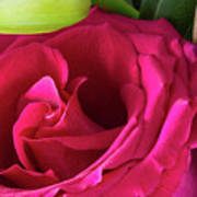 Pink Rose And Bud Close-up Poster