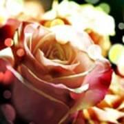 Pink Rose In Sparkling Lights Poster