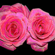 Pink Roses With Enameled Effects Poster