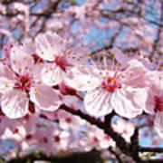 Pink Spring Blossoms Art Print Blue Sky Landscape Baslee Troutman Poster