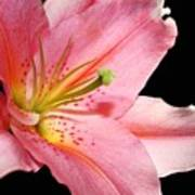 Pink Stargazer Poster