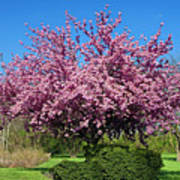 Pink Tree Poster