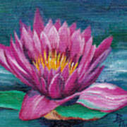 Pink Water Lily Original Painting Poster