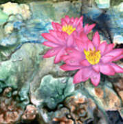 Pink Waterlily Poster
