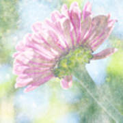 Pink Zinnia On Bokeh Background Poster