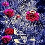 Pink Zinnia's Against A Silver Background Poster