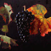 Pinot Noir Grape With Autumn Leaves Poster