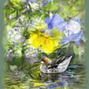 Pintail Pond Poster by Chuck Brittenham