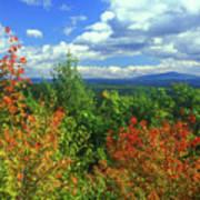 Pisgah State Park Foliage Poster