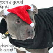 Pit Bull Christmas Two Poster