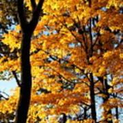 Pitchfork In Autumn Light Poster