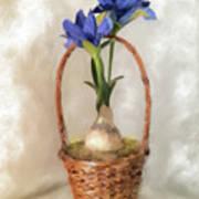 Plain Blue Iris Poster