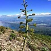 Plant On Volcano Slope Poster