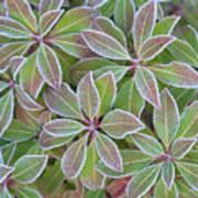 Plant Pattern Poster