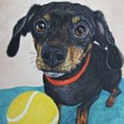 Playful Dachshund Poster by Megan Cohen