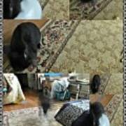 Playtime With Bunny Poster