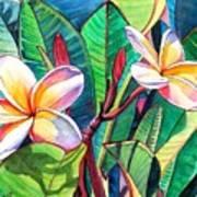 Plumeria Garden Poster by Marionette Taboniar