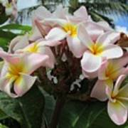 Plumeria In Pink 3 Poster