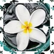 Plumeria In Water Poster