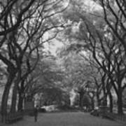 Poets Walk In Central Park Poster by Christopher Kirby