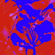 Poinciana Flower 4 Poster
