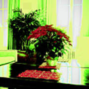 Poinsettia By Kef Poster