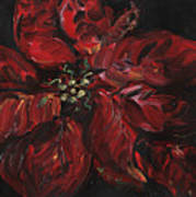 Poinsettia Poster by Nadine Rippelmeyer