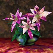 Poinsettia Still Life Poster