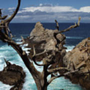 Point Lobos Rocks And Branches Poster