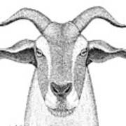 Farm Goat In Pointillism Poster