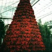 Pointsettia Tree Poster