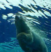 Polar Swim Poster