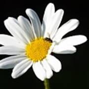 Pollen Collection Poster