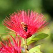 Pollen Collector Poster