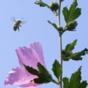 Pollen Nation Poster