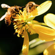 Pollinating Bees Poster