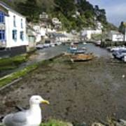 Polperro Harbour Cornwall And Seagull Poster