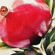 Pomegranate On A Pineapple Stalk Poster