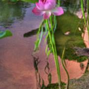 Pond Dreams10 Poster