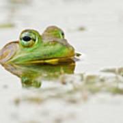 Pond Frog 4 Poster