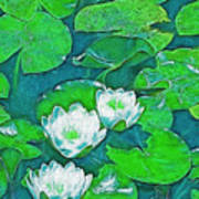 Pond Lily 2 Poster