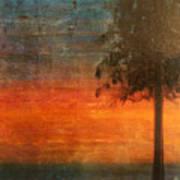 Ponderosa Pine Poster